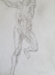 anatomical-study